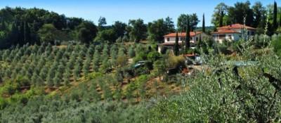 Ferienwohnung Toskana Weingut | Ansicht Weingut