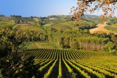 BB Casale Antico | Aussicht Umgebung | B&B San Gimignano Toscana