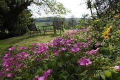 Toskana Ferienhäuser - Ferienhaus Niccolini - Garten