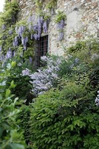 Toskana Ferienhäuser - Ferienhaus Niccolini - Gartendetail