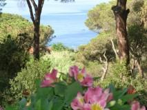 Ferienhaus Elba am Meer - Silva II