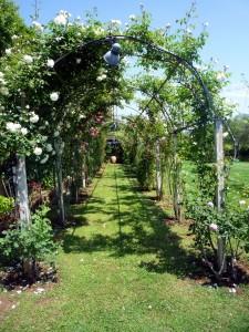 Ferienwohnung Marinella - Rosengarten