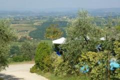 Ferienwohnung Toskana Weingut | Aussicht vom Pool