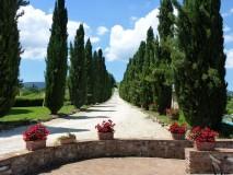 BB Toscana | Borgo Toscano | San Gimignano | Zypressenzufahrt