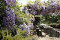 Ferienwohnungen Toskana | Weingut |Ginella