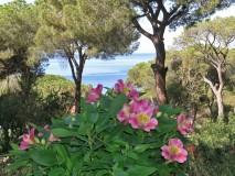 Elba Ferienwohnung am Strand Silva I