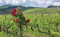 Colognole | Exklusive Ferienwohnung Toskana Greve in Chianti