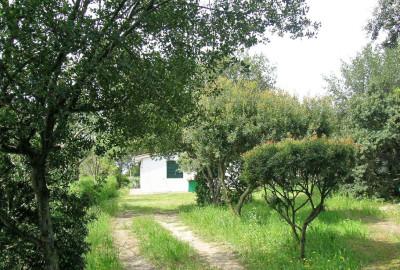 Verdiana 1   Ferienwohnung Elba am Meer   Gartenbereiche