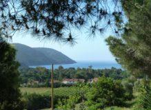 Ferienwohnung Elba Lacona | Aussicht von Casa Sorbello