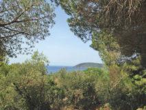 ferienwohnung zuccale capoliveri (5)