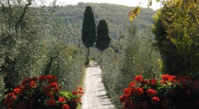 Zufahrt Antiker Weiler Montersiccio | Weingut Toscana